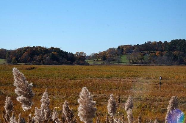 the marshes near Crane's Beach