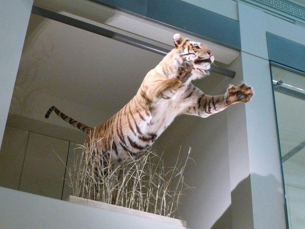 Beware of tigers