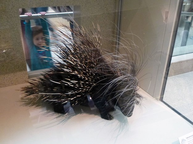 For protection against being pet by small children, porcupines have developed spines