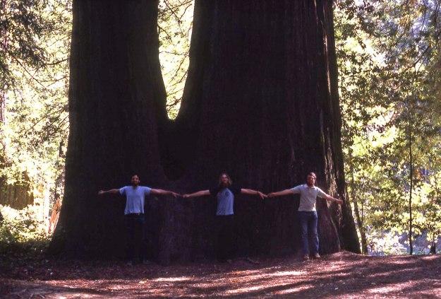 redwood021